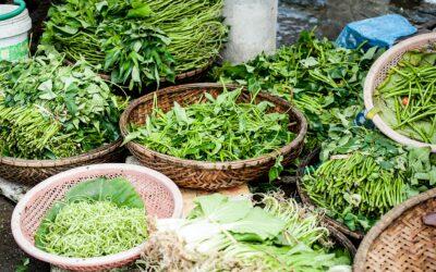 ¿Quieres saber los métodos de utilización de las hierbas?